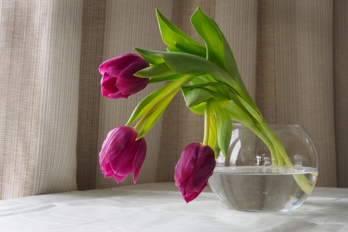 Tout en fleurs