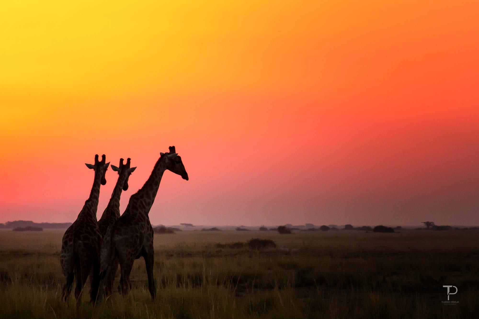 photo de safari en afrique